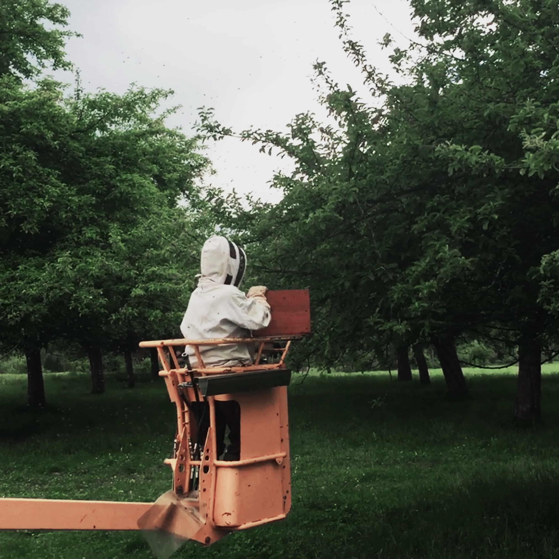 Otto am Bienenschwarm einfangen